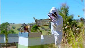 apicultor miel de manuka
