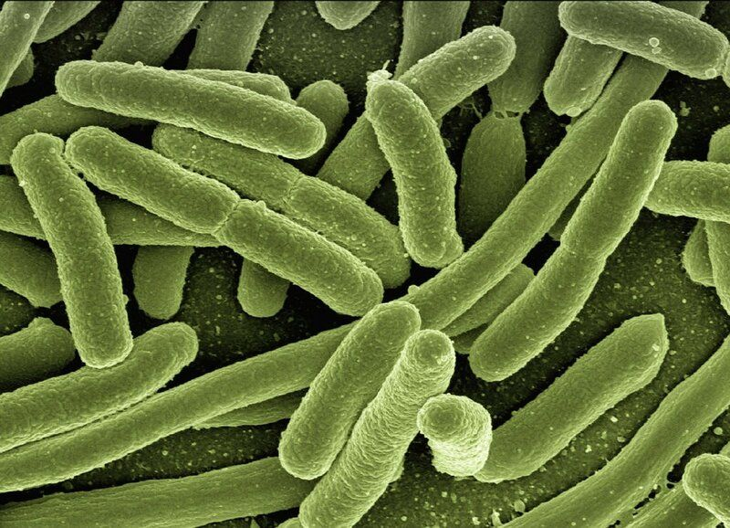 miel de manuka antimicrobiano natural